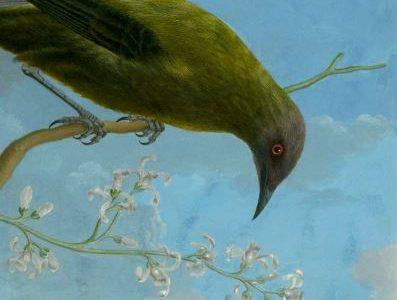 Vorankündigung: FaunaFloraForster – Georg Forsters Bilder der Natur